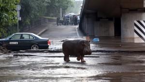 150614103627-tbilisi-floods-2-super-169
